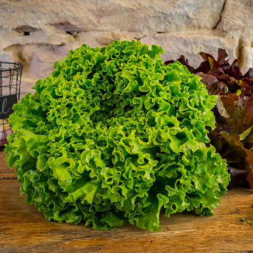 La salade –  France  –  Catégorie I