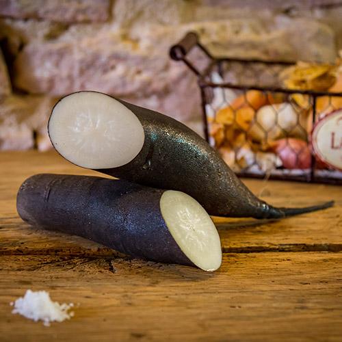 Le radis noir paysan – France (condrieu)