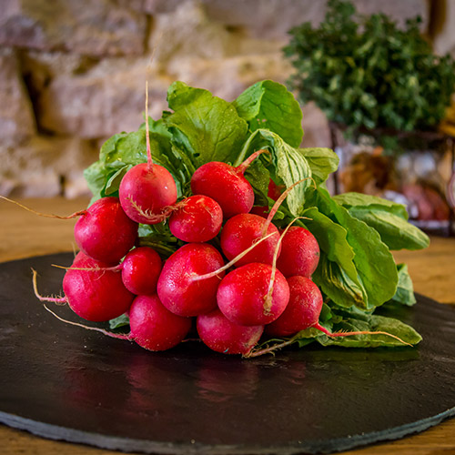 Le radis rond rouge