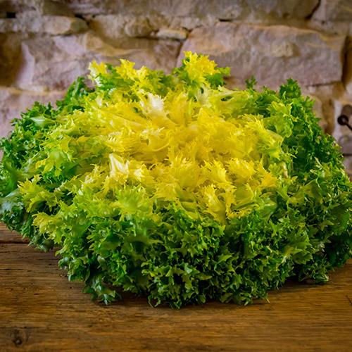 La salade frisée – France