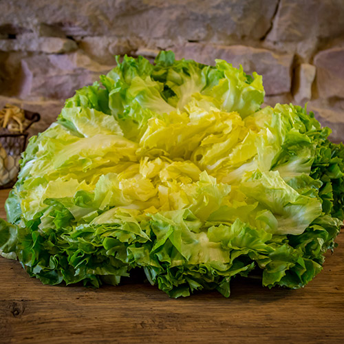 La salade scarole – France