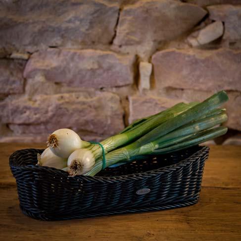 L'oignon fane – France