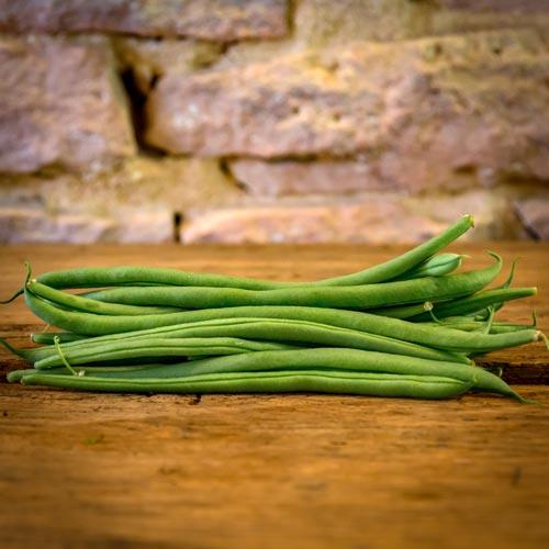 Le haricot vert – Maroc